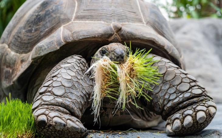 Mláďata v pražské zoo návštěvníky zvědavě okukují