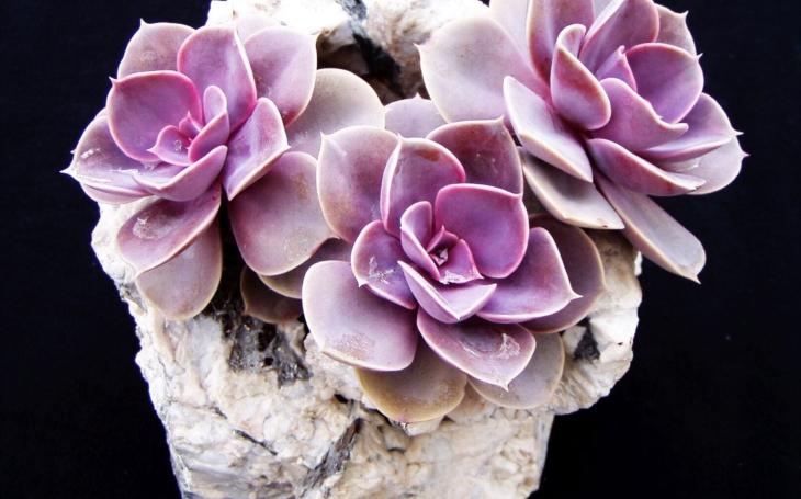 Pohádkové krajinky ze sukulentních rostlin
